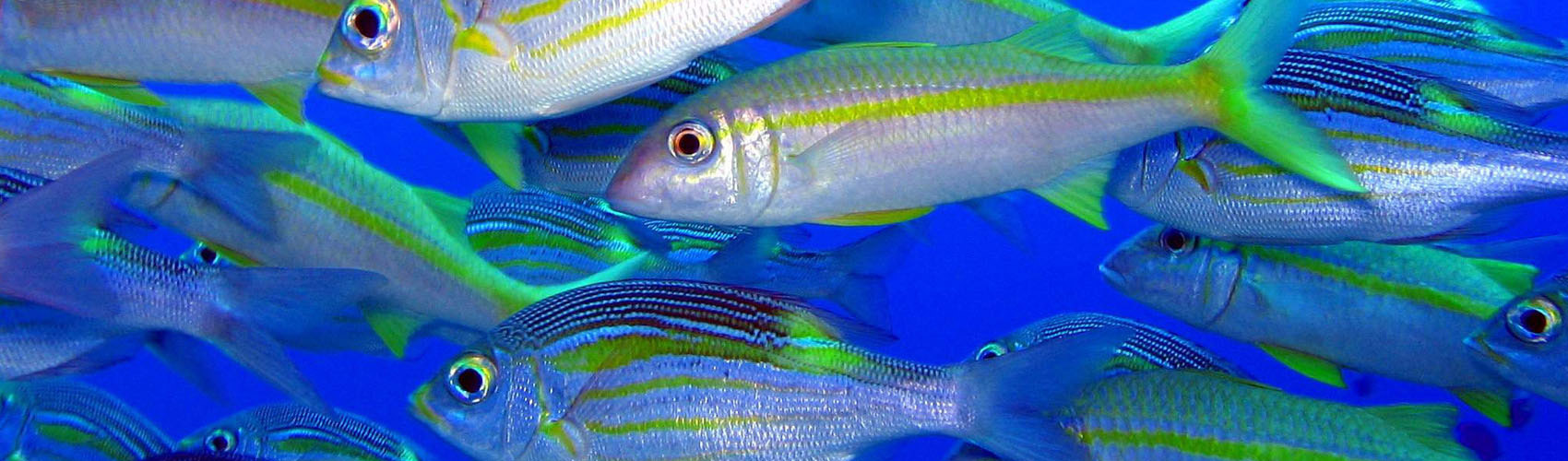 marche sous eau Île Maurice