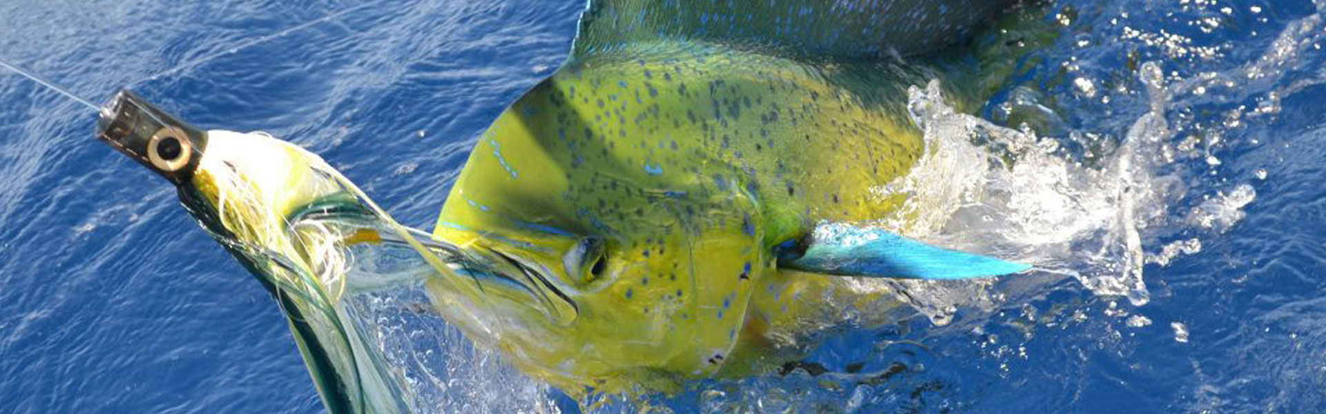 Pêche au gros Île Maurice
