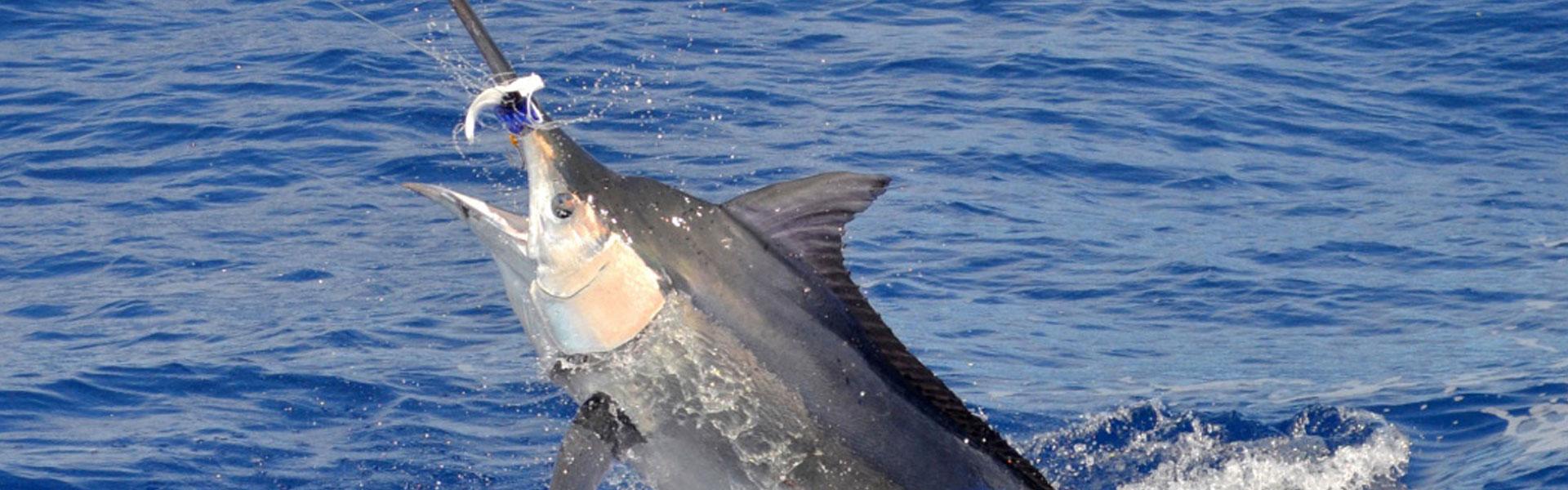 Pêche Île Maurice